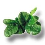 Vitamin K in Spinach