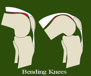 Bending Knees