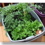 Container Garden Update #2