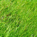 Bokashi Tea and the lawn