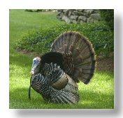 Low Carb Thanksgiving