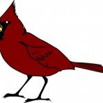 Make Shift Bird Deterrents