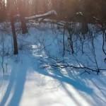 Snow Shovel Workout