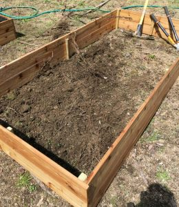 Roots and Compacted Dirt